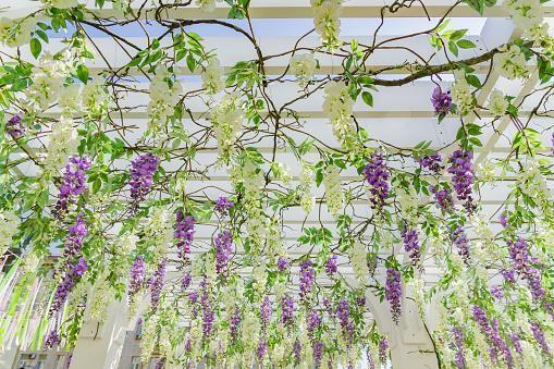 hanging greenery at wedding